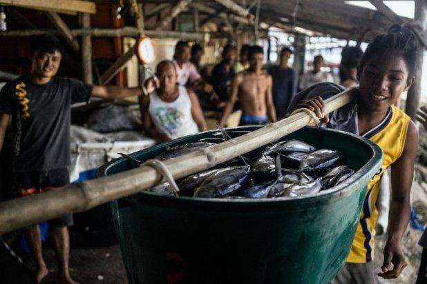Un pescador carga atunes para el mercado de Puerto Princesa. Organizaciones como el WWF forman a los profesionales a métodos de pesca menos dañinos para evitar la disminución de las poblaciones de peces en el Triángulo de Coral.rn