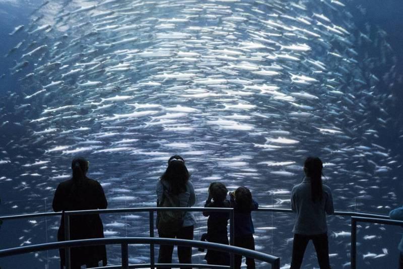 Imagine un acuario gigante en el que pudiese atravesar las mamparas de cristal que le separan del agua para recorrer un bosque de sargazos, nadar entre lobos marinos, encontrarse cara a cara con tiburones y ballenas o asistir al combate entre dos feroces calamares gigantes. Y todo ello sin mojarse. El pasado 6 de octubre abrió sus puertas en Times Square, en Nueva York, el espacio National Geographic Encounter: Ocean Odyssey, una atracción inmersiva de más de 5.500 metros cuadrados que emplea tecnologías holográficas y de realidad virtual para llevar a los visitantes hasta el fondo del mar en un fabuloso viaje submarino por el océano Pacífico. En su construcción han participado oceanógrafos y diseñadores del equipo de efectos visuales de Juego de tronos. El paisaje sonoro es obra del compositor David Kahn, que ha empleado cientos de grabaciones subacuáticas. La visita dura 90 minutos y cuesta 32 euros.