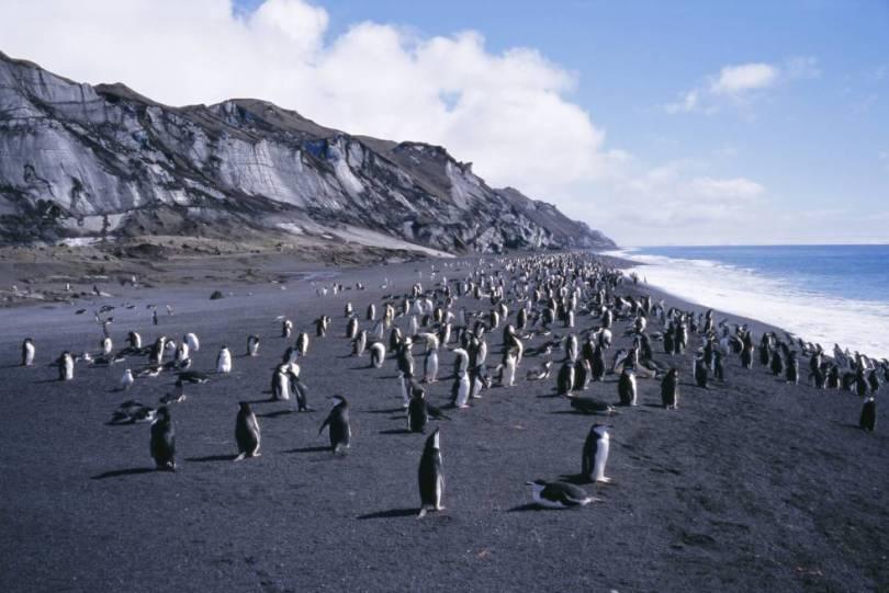 A Ilha Decepção brilha com a própria luz no remoto arquipélago das Ilhas Shetland do Sul, na ponta norte da Antártida, com um porto secreto ocupando a cratera de um vulcão. Você pode entrar pela boca estreita da baía cercada por praias de areia preta e encostas nevadas, cobertas de gelo e cinzas, onde se refugiam colônias de pinguins-de-barbicha. O visitante se depara com o passado industrial da ilha em sua estação baleeira abandonada, destruída em parte por uma erupção. E, claro, é bom levar traje de banho para nadar nas correntes geotérmicas da ilha. Pode-se chegar à Deception Island em cruzeiros pela Antártida que partem do sul da Argentina.