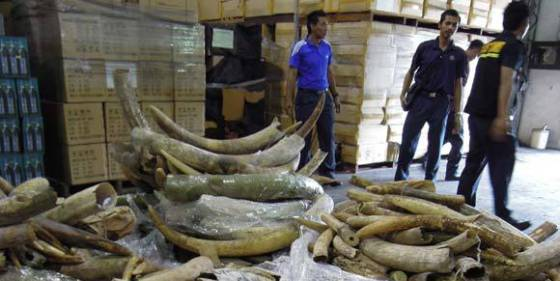 Ivory Confiscated in Malaysia