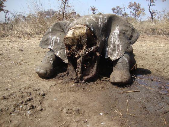 La UE y EE UU exigen a Camern que frene la matanza de