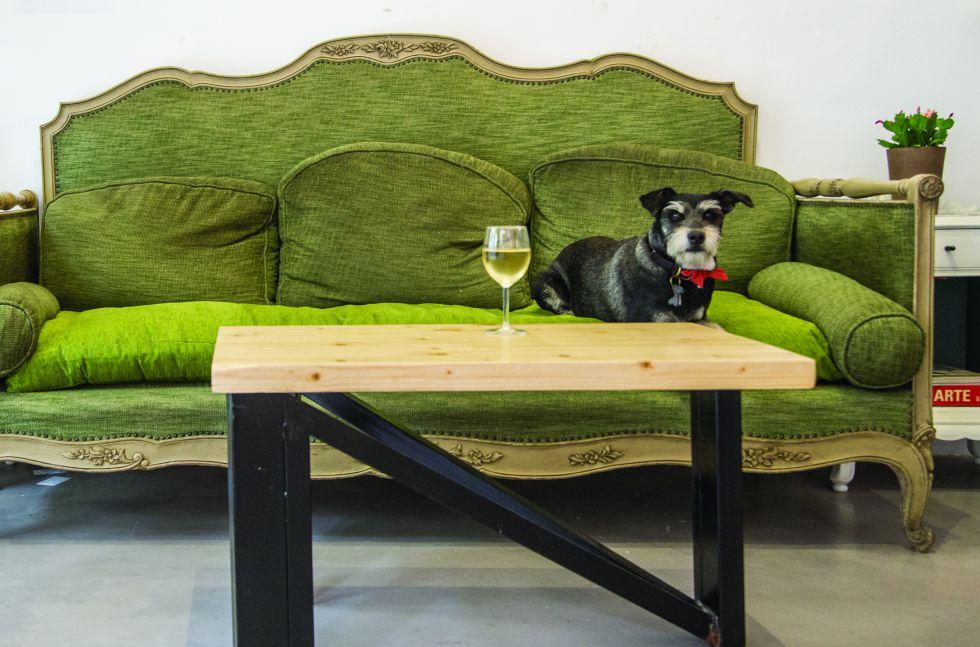 'Colega', la mascota del portal perruno, en un bar que acepta canes.