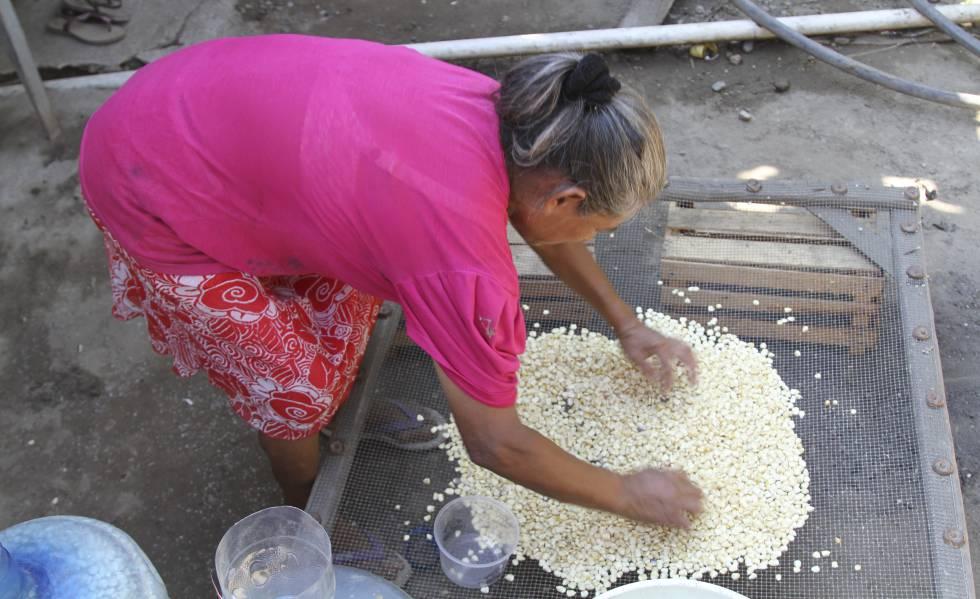 Una mujer que cultiva maíz para autoconsumo en Acapulco (Guerrero).