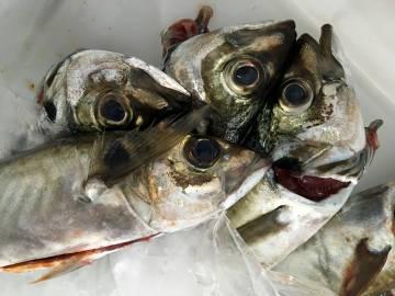 Jureles de Artesans da Pesca.