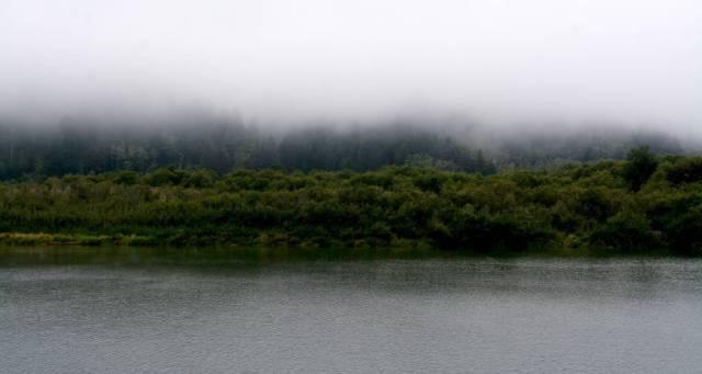 Las enormes secuoyas que habitan la ribera del río Klamath están cubiertas por la neblina a primera hora de la mañana.