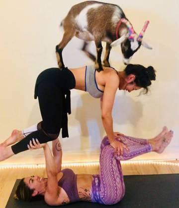 Dos mujeres juegan con una de las cabras, en una imagen publicada en Facebook.