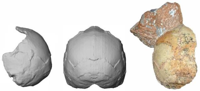 O crânio 1 de Apidima com parte de sedimento aderido, supostamente de um 'Homo sapiens' que viveu há 210.000 anos, o mais antigo da Europa.