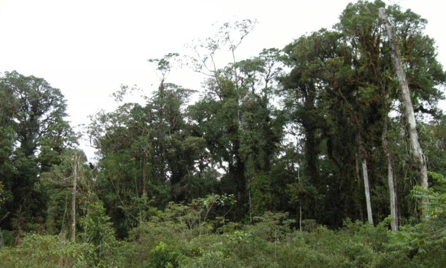 The deteriorated forest of a mountain on Taliabu Island.