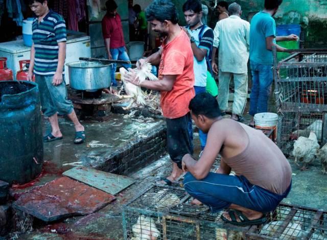 Coronavirus: Los mercados de animales salvajes, tortura para ellos ...