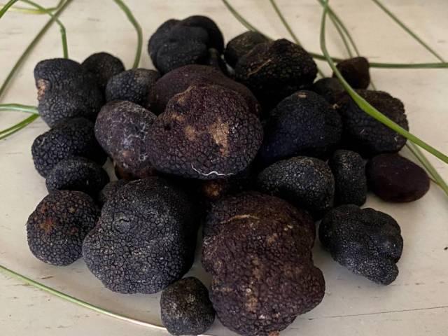 Trufas 'picoa juniperi'.