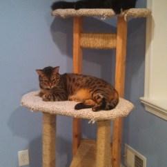 Adirondack Chair Pattern Wal Mart Chairs Build Simple Cat Tree Diy Cedar Mailbox Plans – Thoughtless67anu