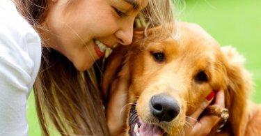 perros y seres humanos