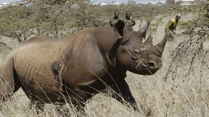 Image result for Kenia anuncia pena de muerte para los cazadores furtivos