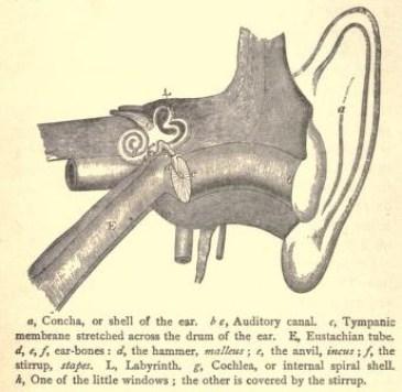 p2 the ear