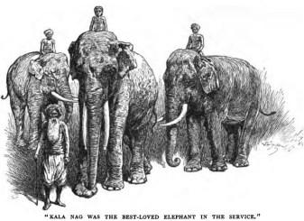 toomai other elephants