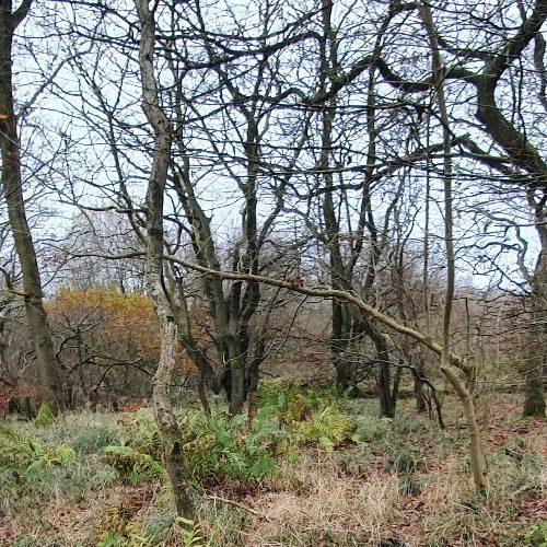 woodland habitats can support red squirrel, pine marten, and wildcat.
