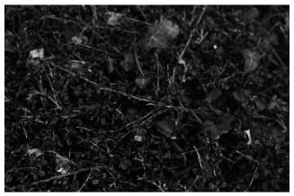 mirco_landscape_2