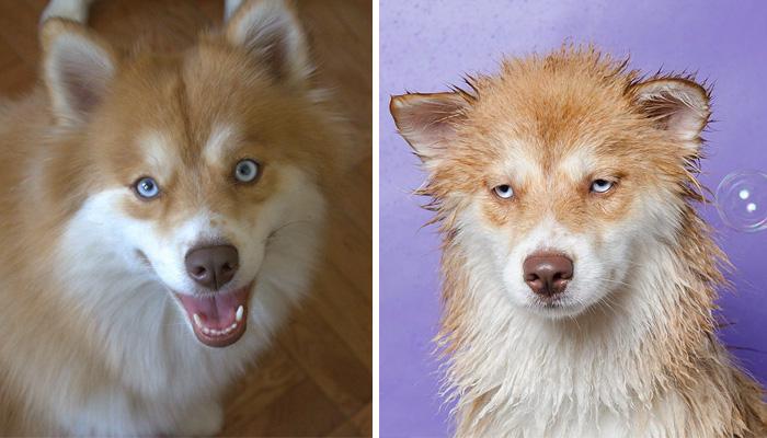 Existe algo ms divertido que comparar a un perro seco y mojado