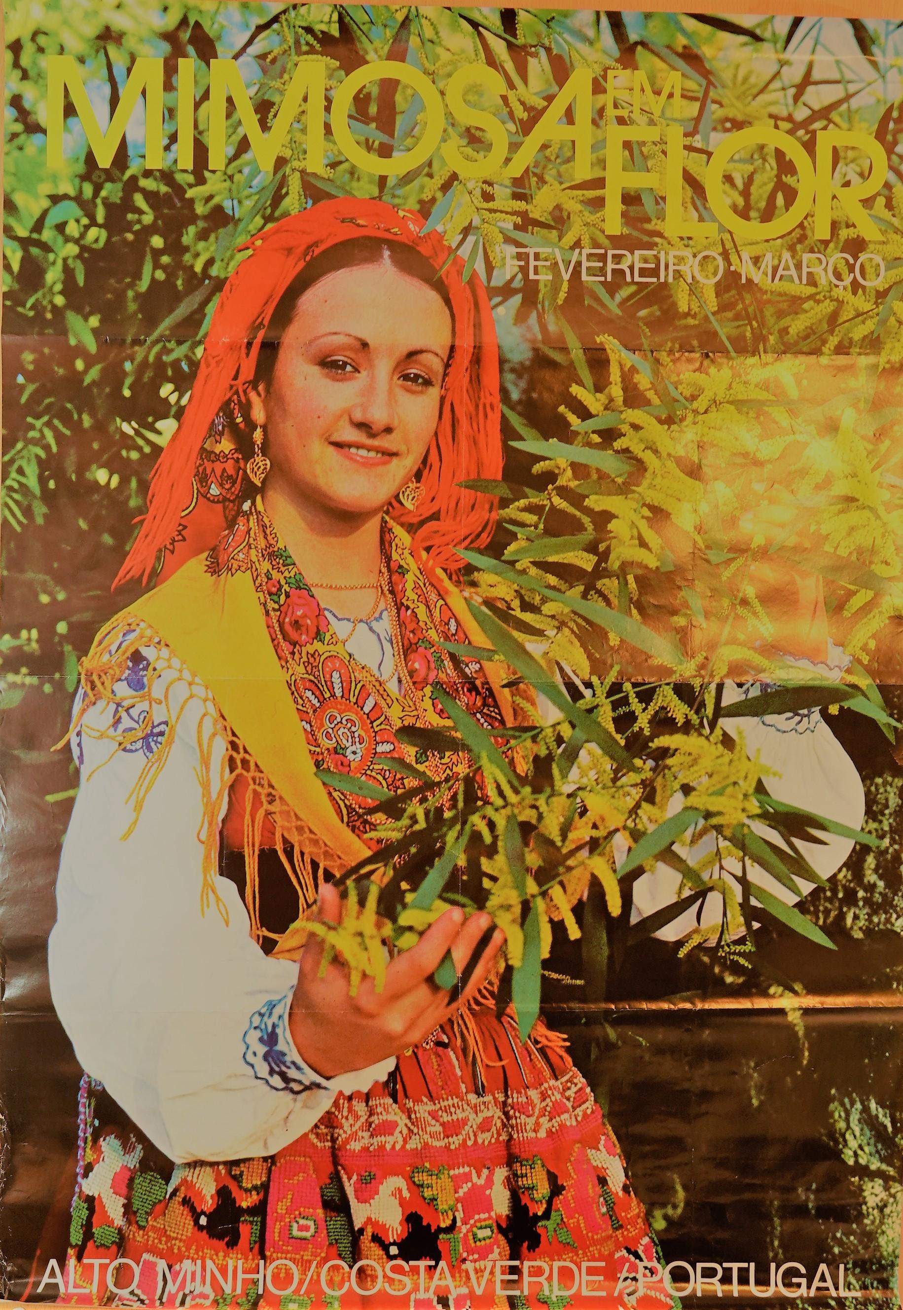 RX403870_T_mimosas em flor alto minho fev_mar