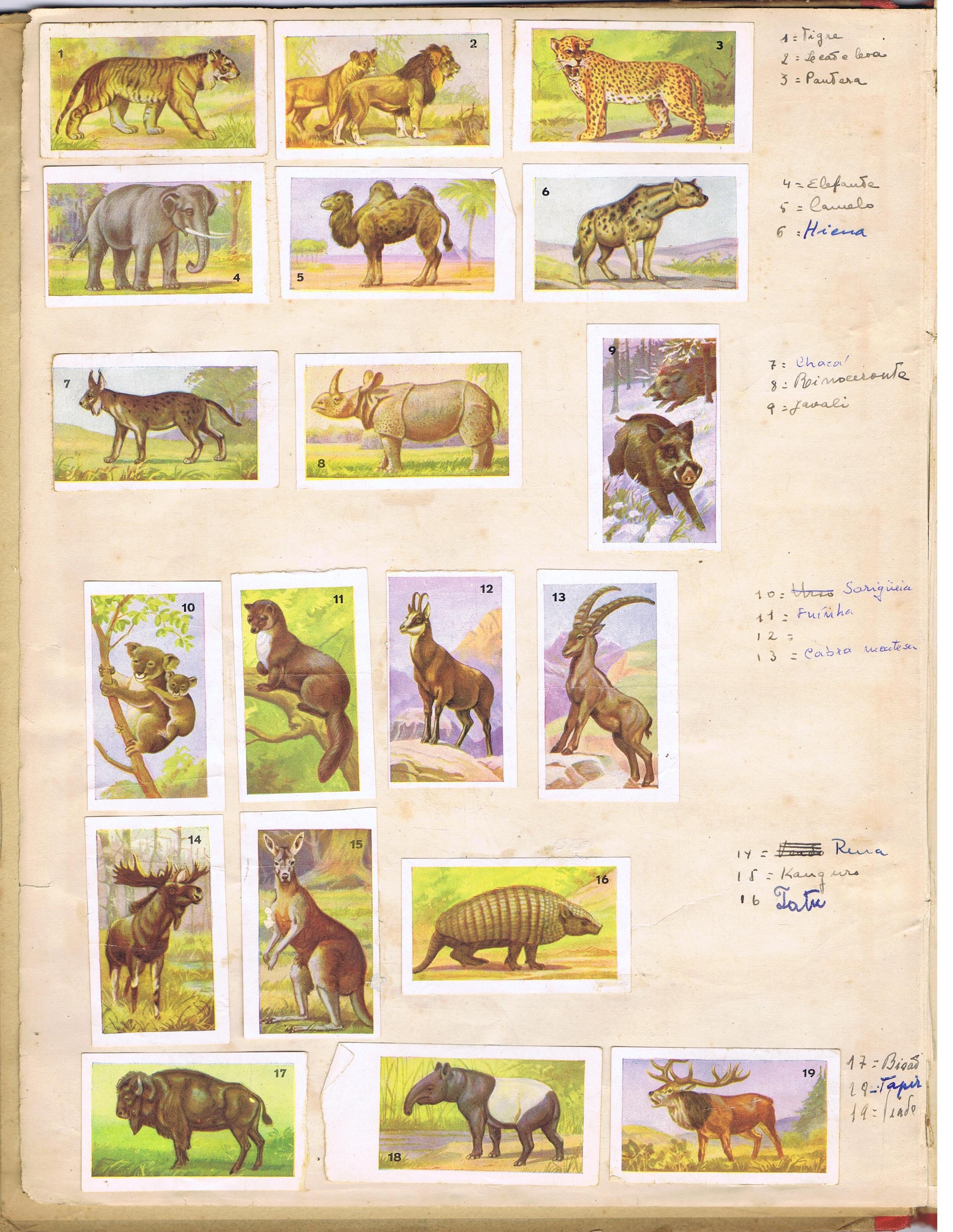 atlas de zoologia 2