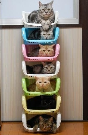 ~ Collections ~ Cats in Baskets