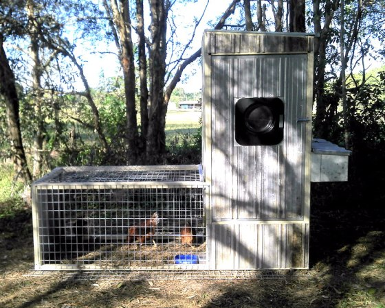 The Chicken Palace… help us name our new girls! {My Life}