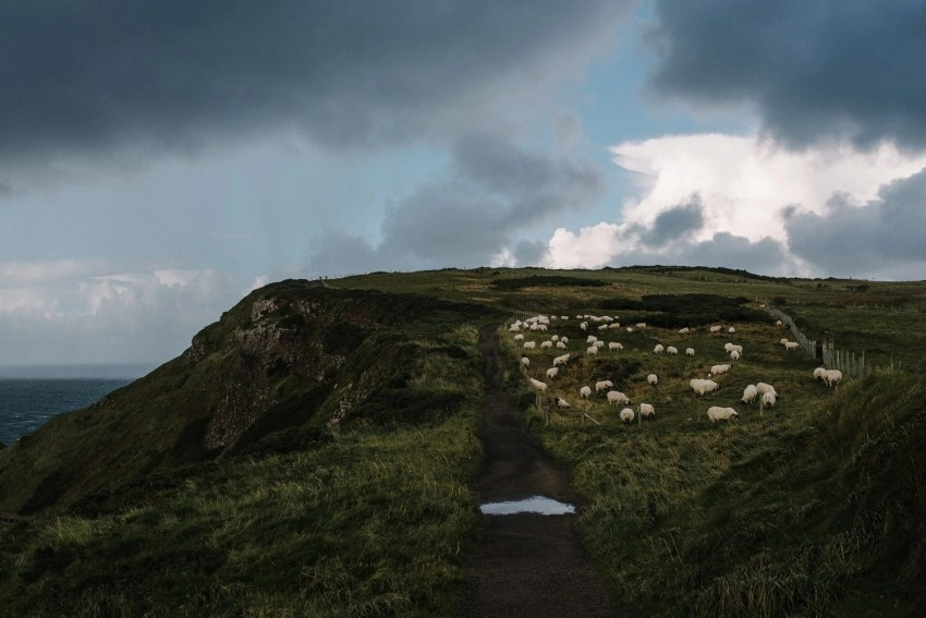 Irish Clifftop Adventure Session Northern Ireland_0001.jpg