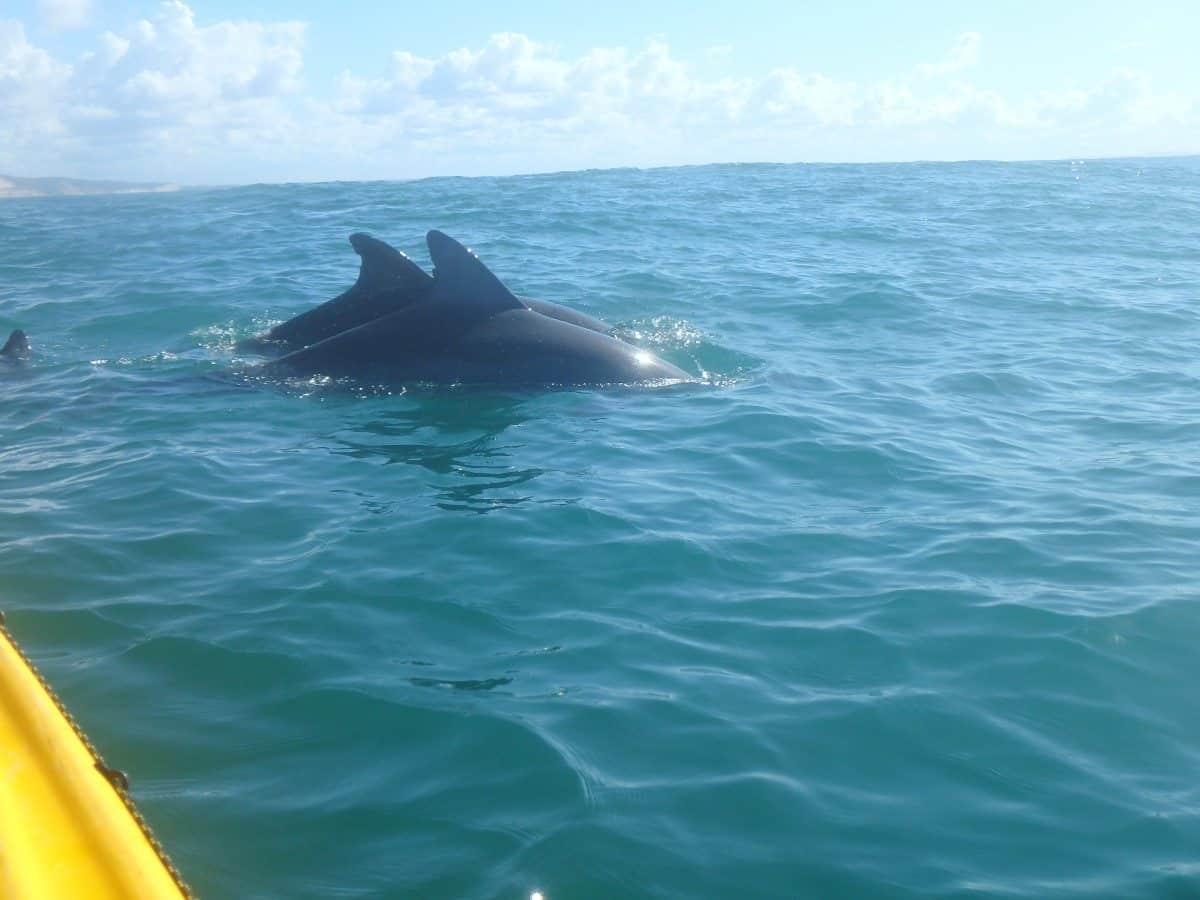 Ocean Kayak Tours Noosa