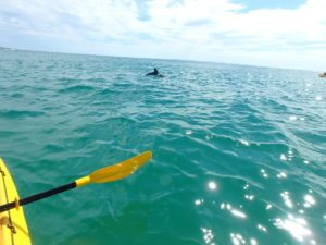 dolphin kayaking tour