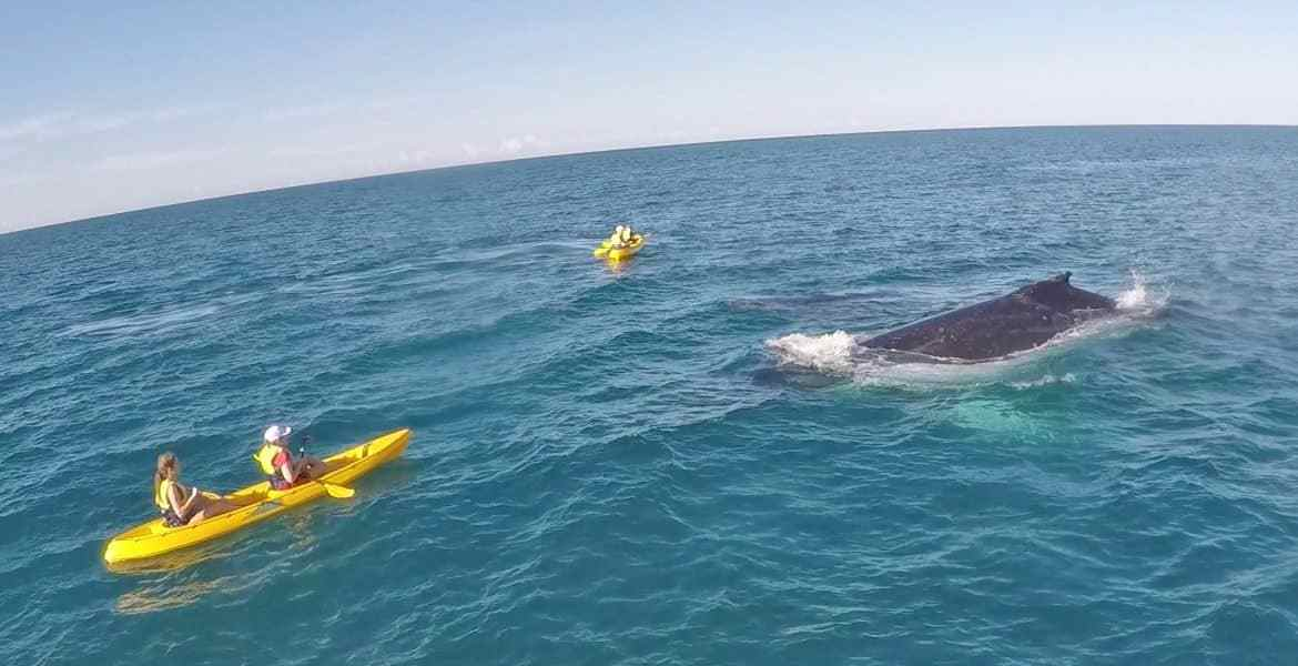 Humpback Whale Migration along the East Coast of Australia