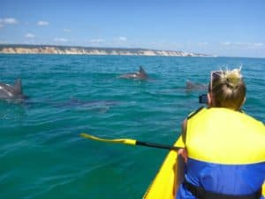 dolphin view sea kayaking