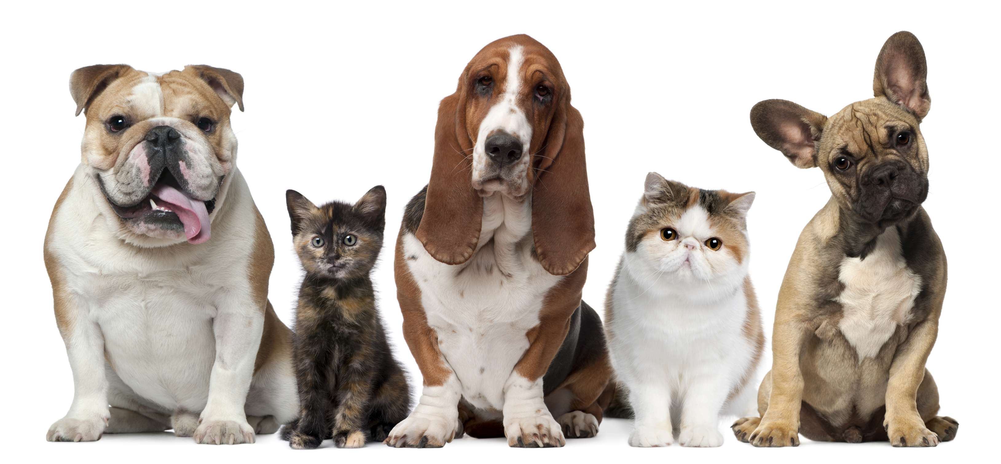 Your children have been begging for a pet. What is your first pick for the family animal?