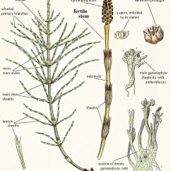 Horsetail Plant Diagram Volvo 740 Wiring 1986 Mike Breiding's Epic Road Trips: 2014 ~ Solo Sojourn: Michigan - Exploring The Falls Of ...