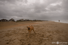 Hurricane Matthew, Cape Hatteras, Cape Hatteras National Seashore, Epic Shutter Photography, Island Life, Island Photographer, Hurricane Season, Hatteras Island Hammered, High Winds, Flooding, Island Weather, Angry Atlantic, Growing Up Island, Buxton, Avon, Frisco, October 8-9, 2016, Hatteras Island Photographers, Swell Life, Hurricane Swell