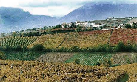 Abruzzo_Illuminati_winery