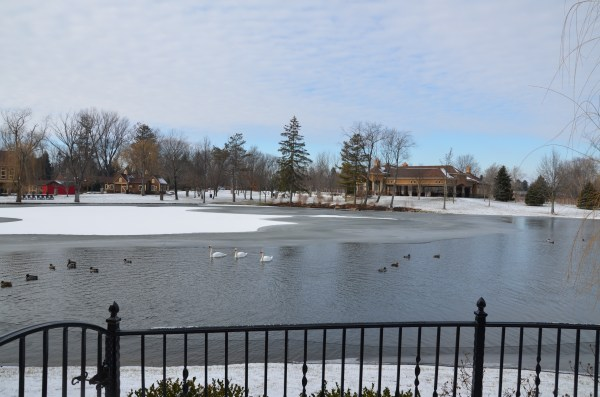 Lake with waterfowl.
