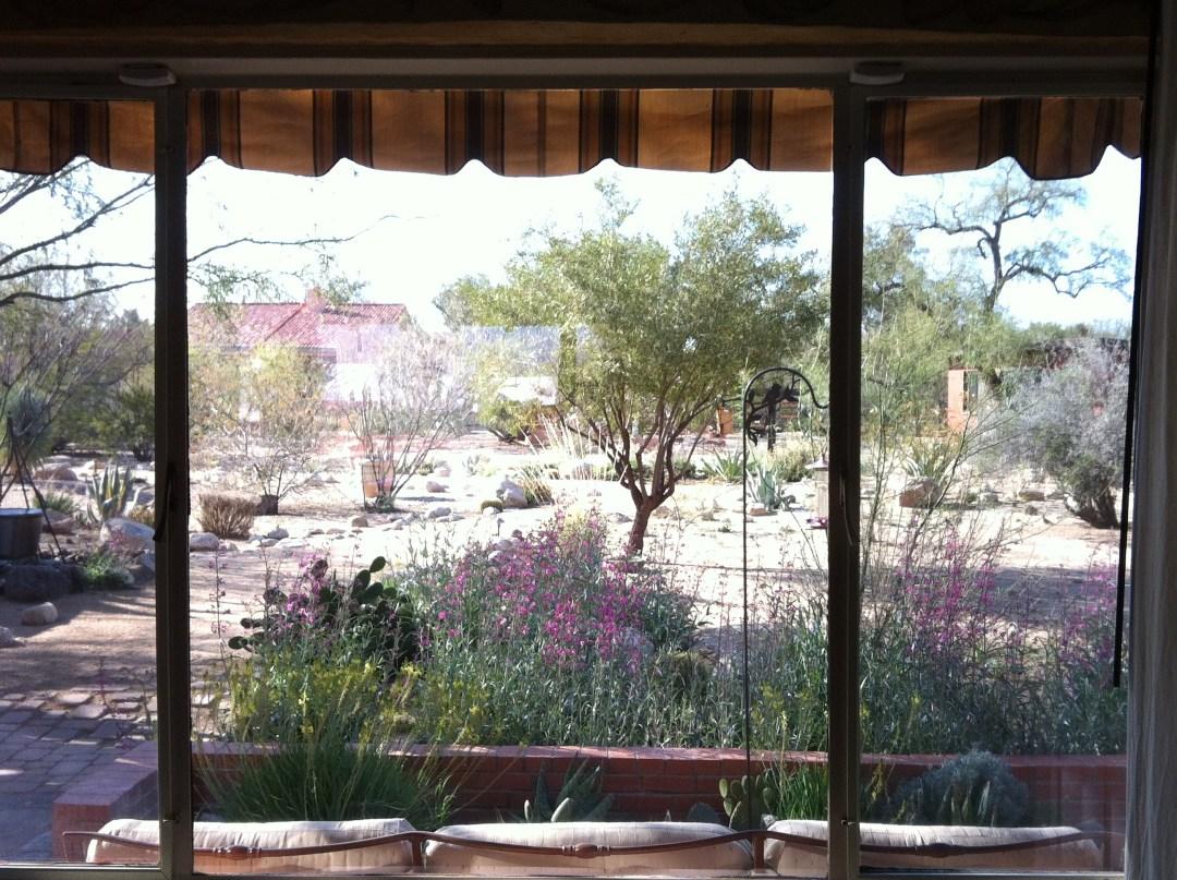 View of the backyard at The Inns at El Rancho Merlita in Tucson, Arizona.
