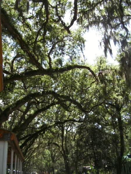 St Augustine Florida Feliz Cumpleanos Epicurean Traveler