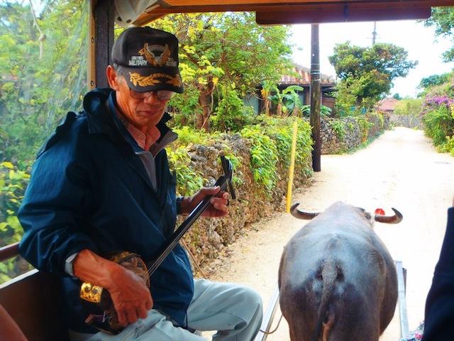 buffalo cart ride taketomi