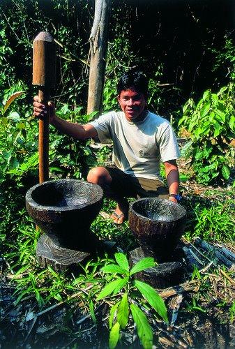 rainforest farmers