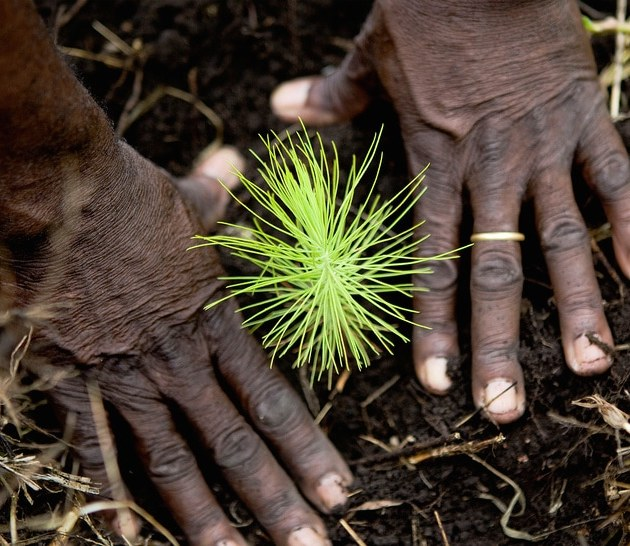 A GoVoluntouring reforestation project in Uganda