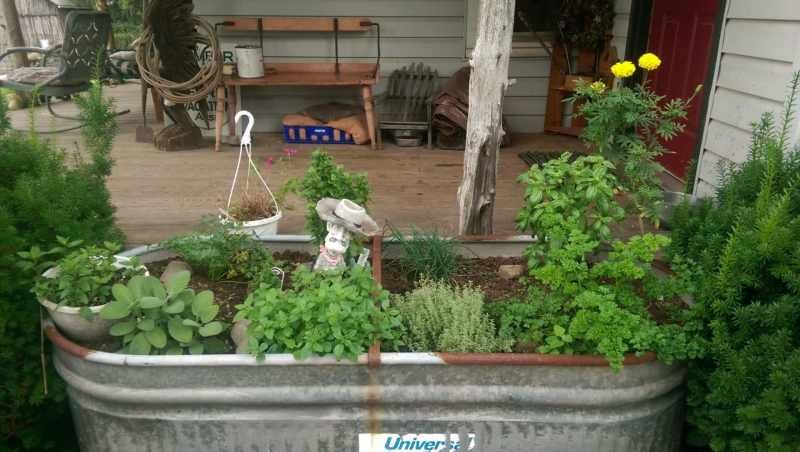 Herb Garden at the Ranch.  Photo courtesy of Buck Valley Ranch.
