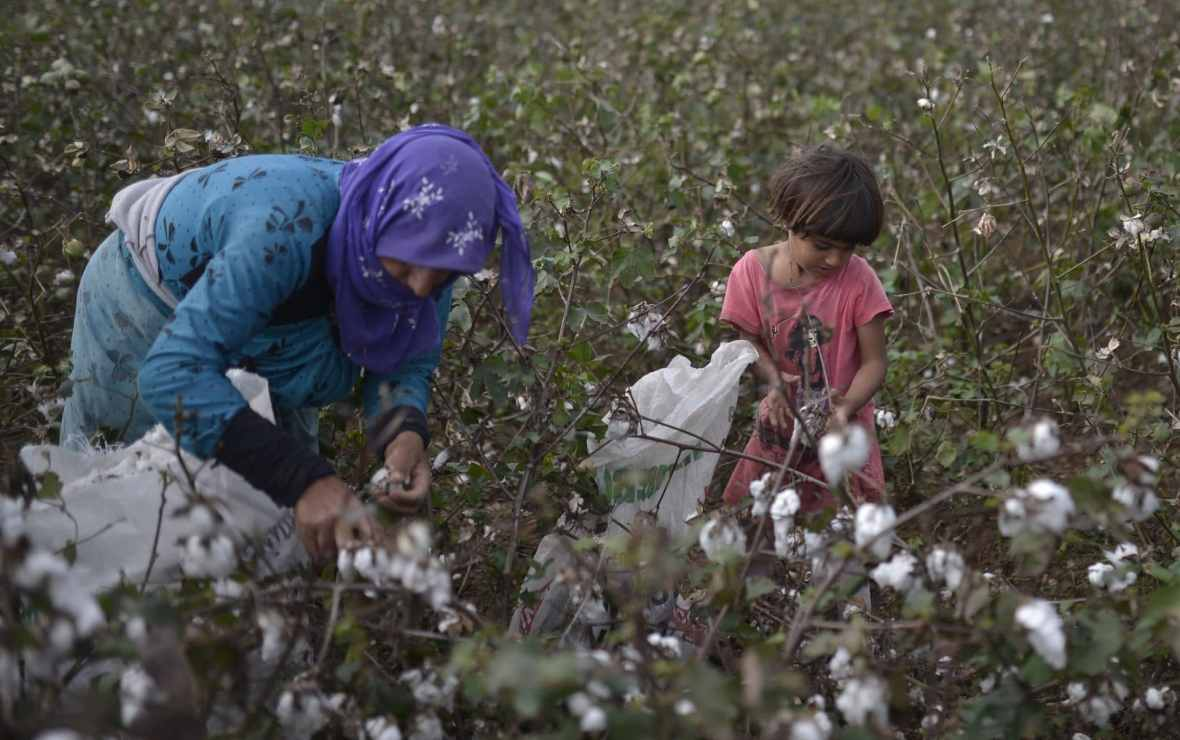 Syrian refugees working in cotton fields in Antalya, Turkey. Photo courtesy of Orlok via Shutterstock