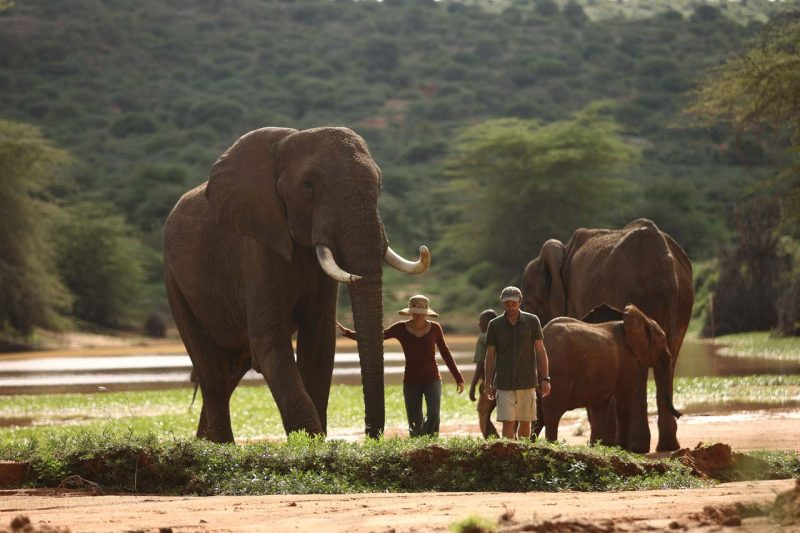 conservation safaris, elephants in Tanzania