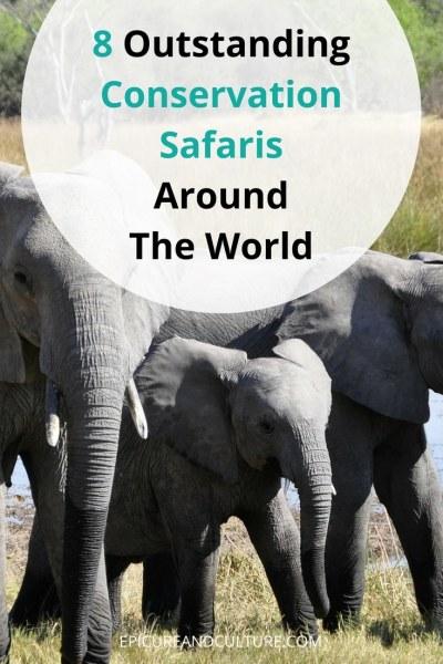 The best conservation safaris around the world