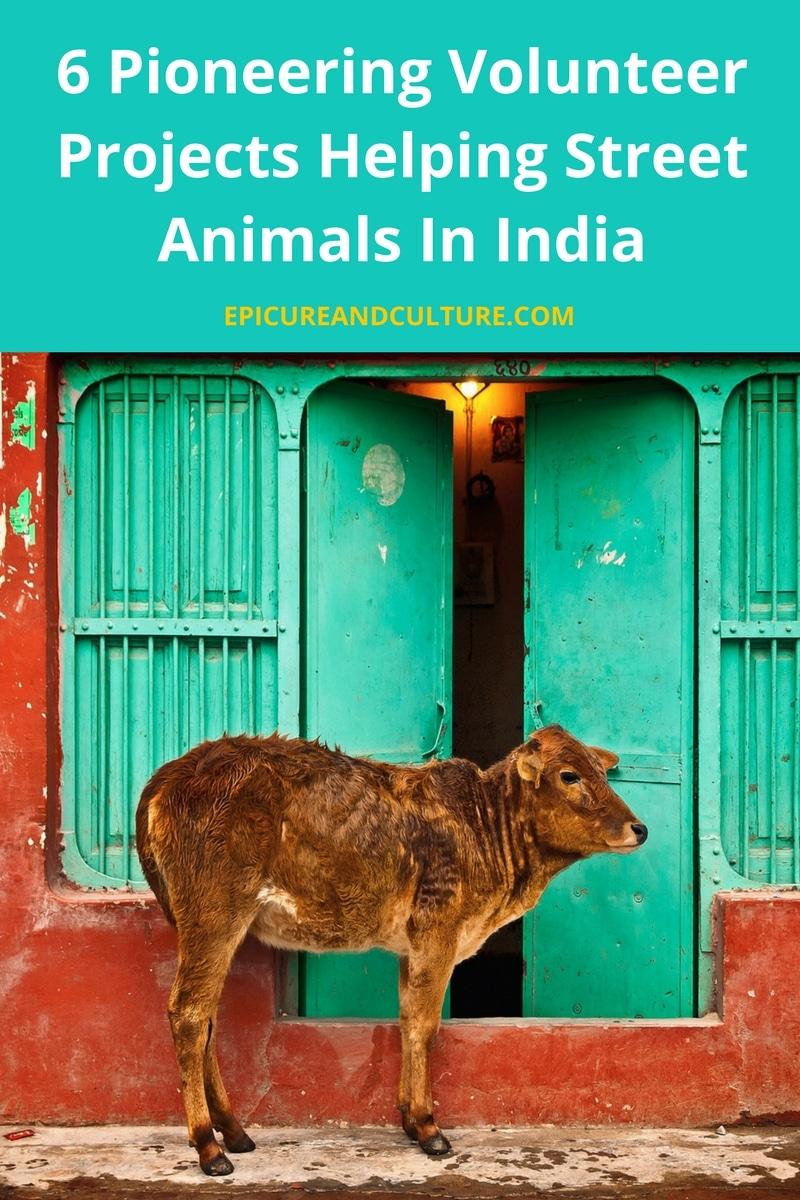 street animals in india