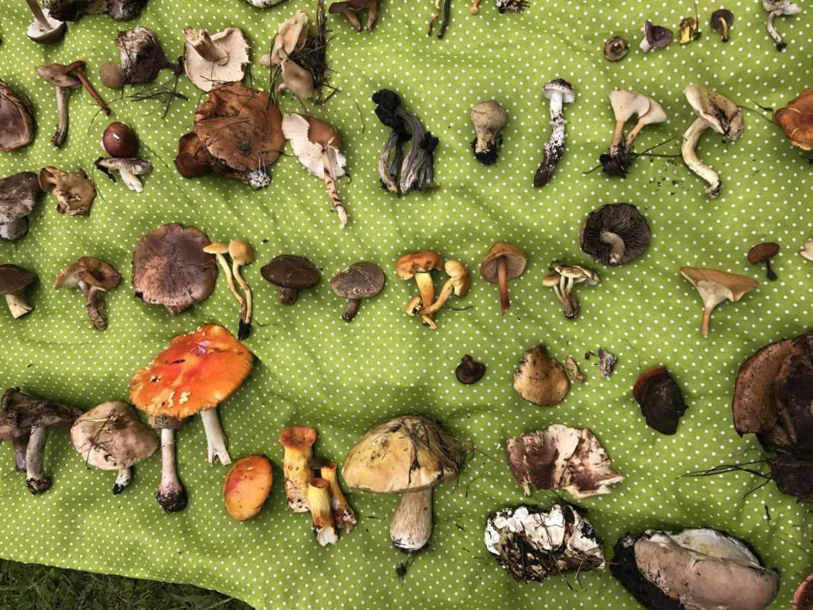 mushrooms in oaxaca travel
