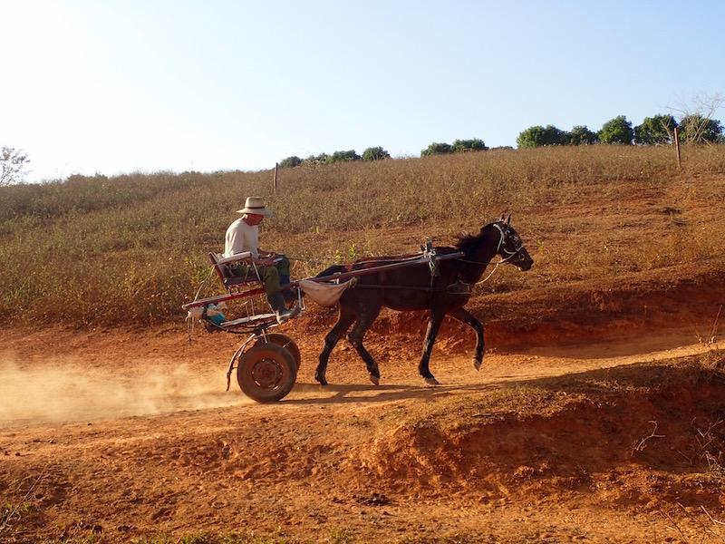 Horse Cart On Vinales Tours