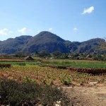 Vinales tobacco fields and mogotes