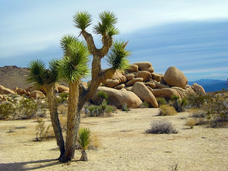 challenges facing sustainable tourism Joshua Tree National Park